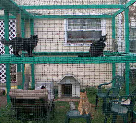 The Large Enclosure - Enclosures For Cats